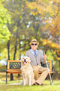 Picture of elderly man sitting on a park bench with a guide dog sitting by his feet.